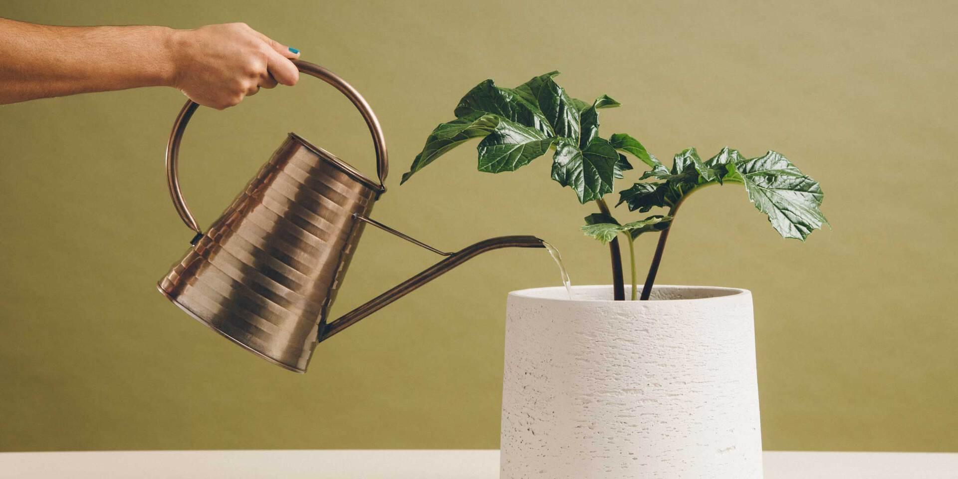 Qué es lead nurturing